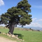 4 Tage auf dem Jakobsweg: Von Le Puy en Velay nach Aumont-Aubrac